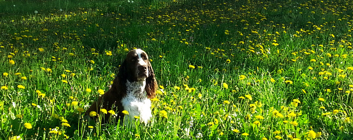 Flower lawn with springer